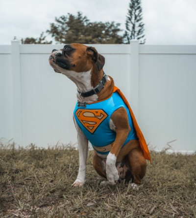 Superhero dog by Elias Castillo