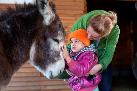 Girl stroking donkey