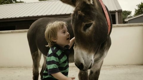 The Donkey Sanctuary Assisted Therapy